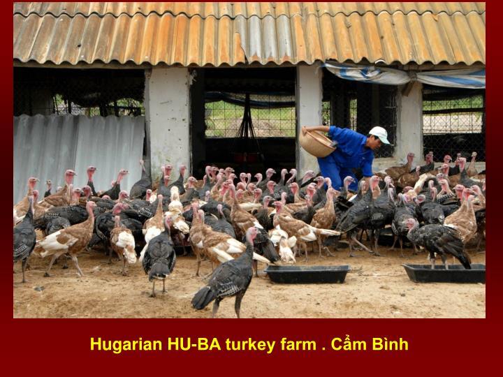 Hugarian HU-BA turkey farm . Cẩm Bình