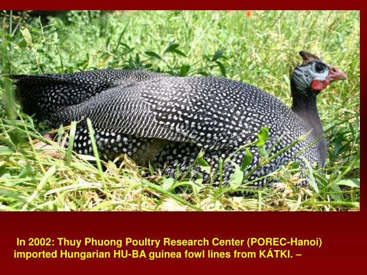In 2002: Thuy Phuong Poultry Research Center (POREC-Hanoi)  imported Hungarian HU-BA guinea fowl lines from KÁTKI. –