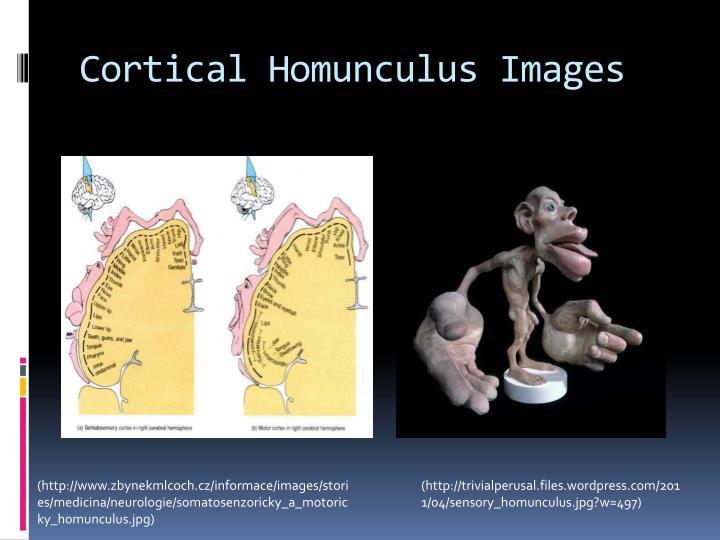 Cortical Homunculus Images