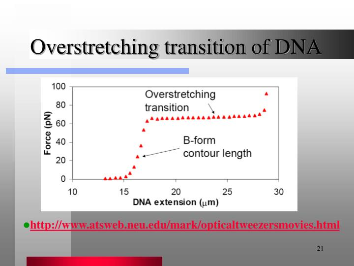 Overstretching transition of DNA