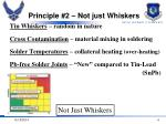 principle 2 not just whiskers