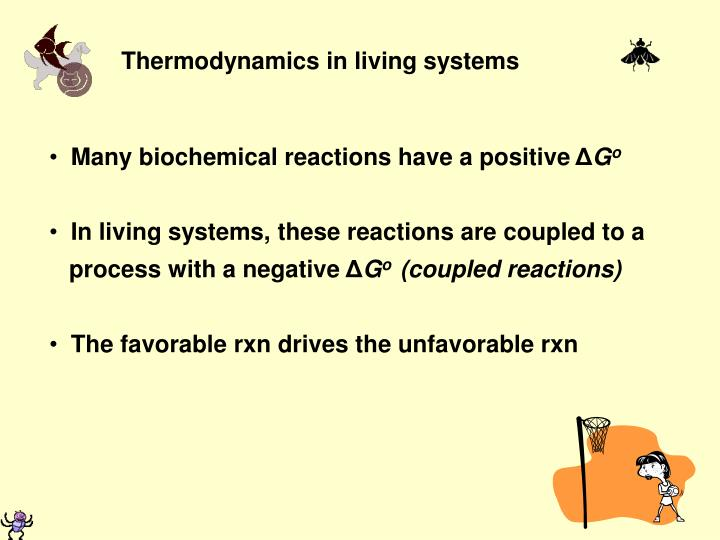 Thermodynamics in living systems