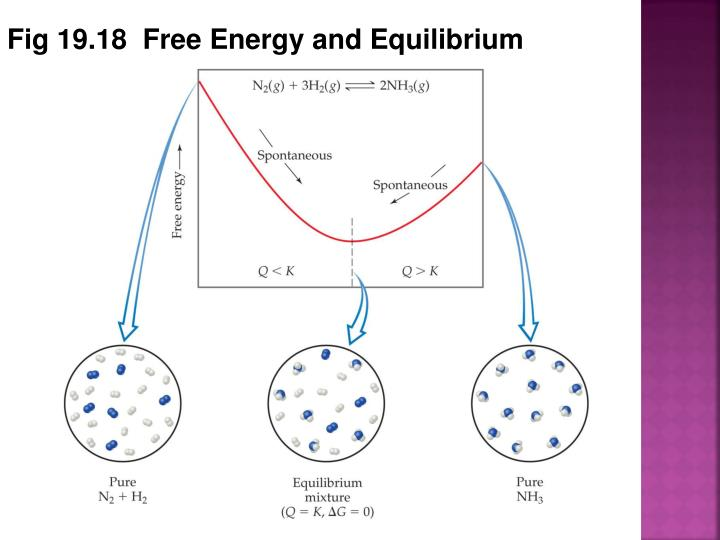 Fig 19.18  Free Energy and Equilibrium