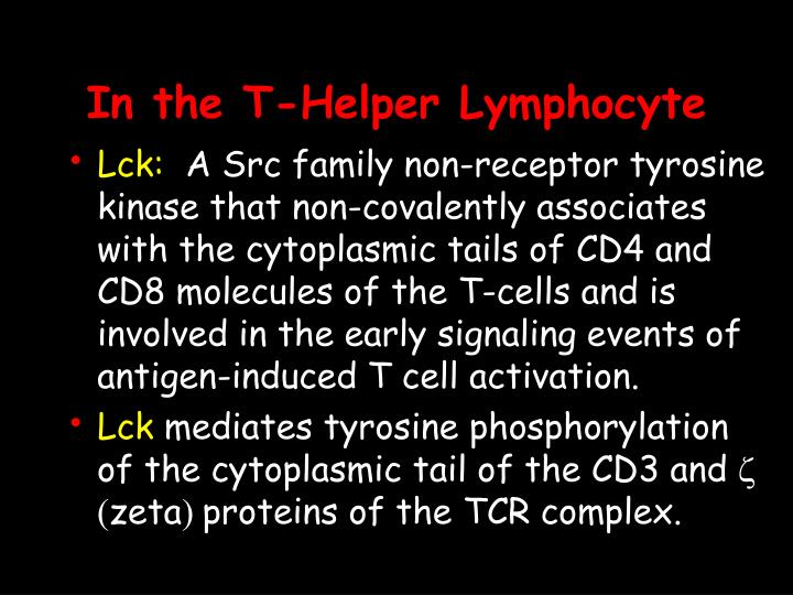 In the T-Helper Lymphocyte