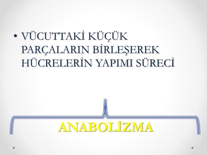 ANABOLİZMA