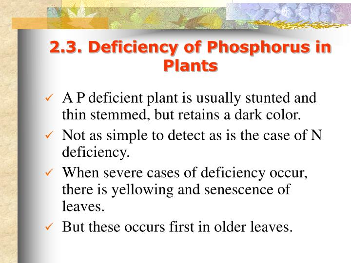 2.3. Deficiency of Phosphorus in Plants