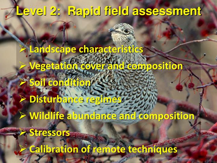 Level 2:  Rapid field assessment