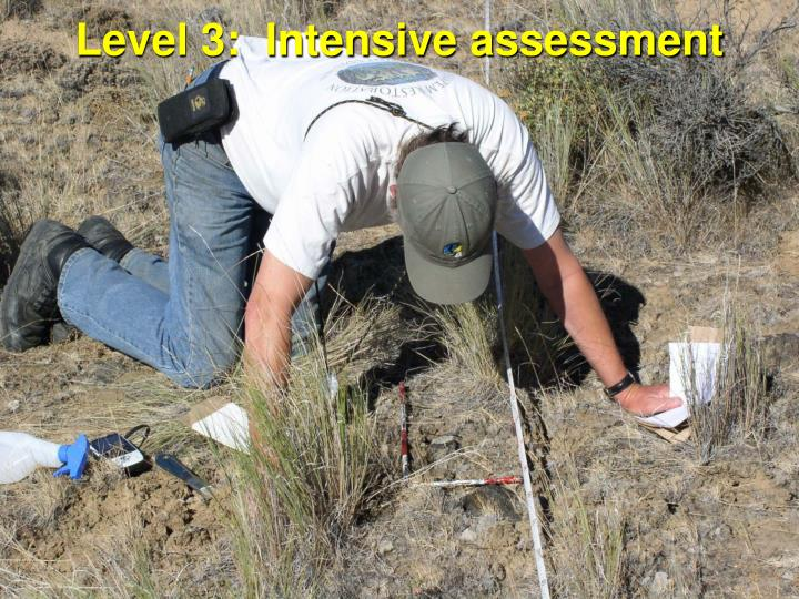 Level 3:  Intensive assessment