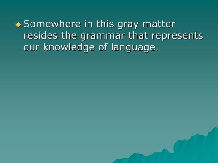 Somewhere in this gray matter resides the grammar that represents our knowledge of language.