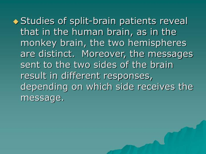 Studies of split-brain patients reveal that in the human brain, as in the monkey brain, the two hemispheres are distinct.  Moreover, the messages sent to the two sides of the brain result in different responses, depending on which side receives the message.