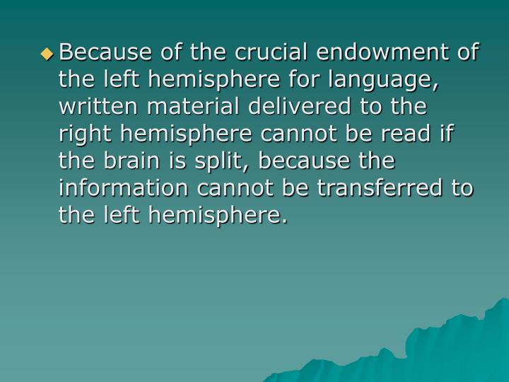 Because of the crucial endowment of the left hemisphere for language, written material delivered to the right hemisphere cannot be read if the brain is split, because the information cannot be transferred to the left hemisphere.