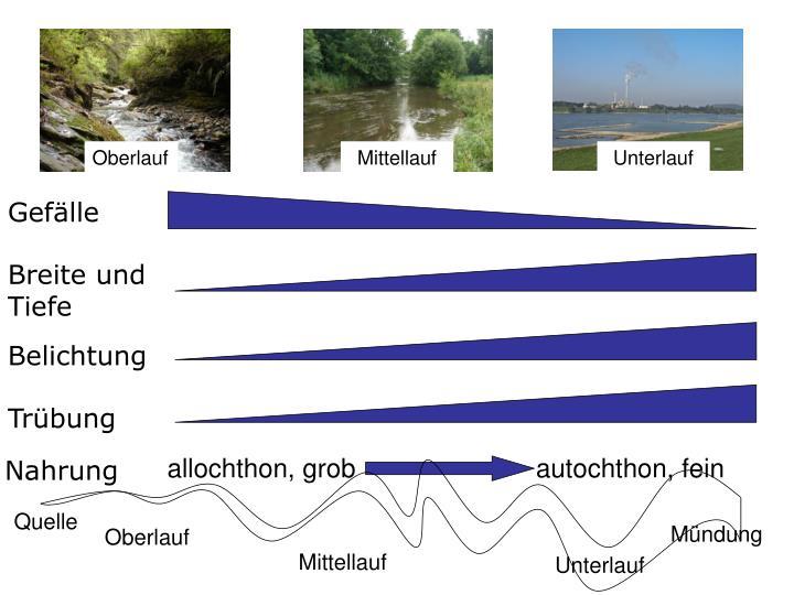 Umweltfaktoren im Längsverlauf