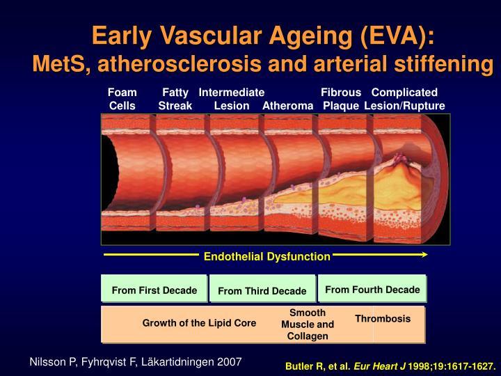 Early Vascular Ageing (EVA):