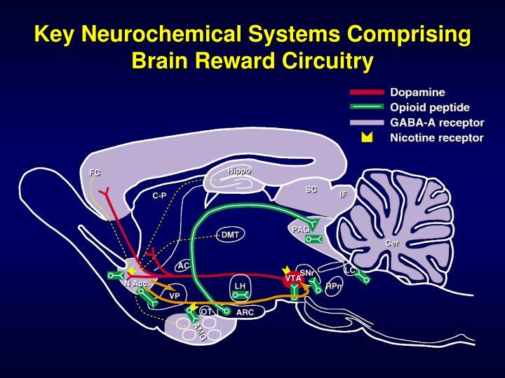 Key Neurochemical Systems Comprising Brain Reward Circuitry