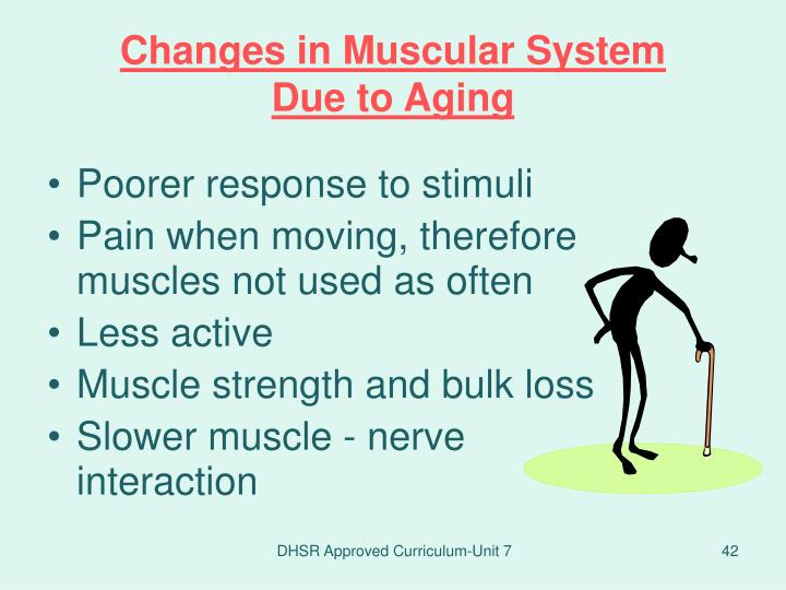 Changes in Muscular System