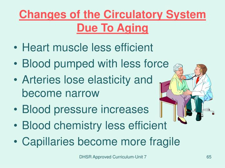 Changes of the Circulatory System Due To Aging