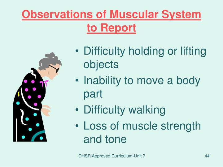 Observations of Muscular System