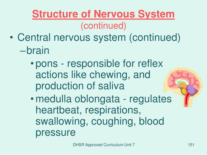 Structure of Nervous System