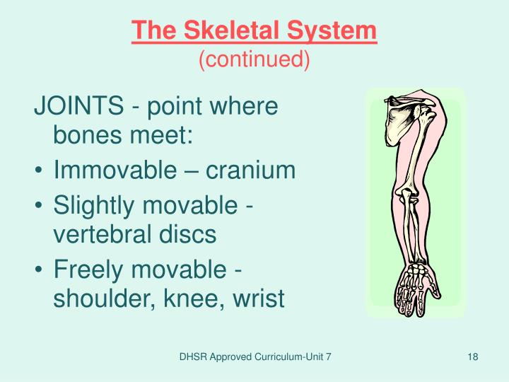 JOINTS - point where bones meet: