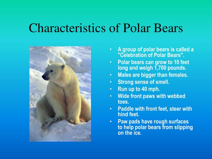 Characteristics of polar bears