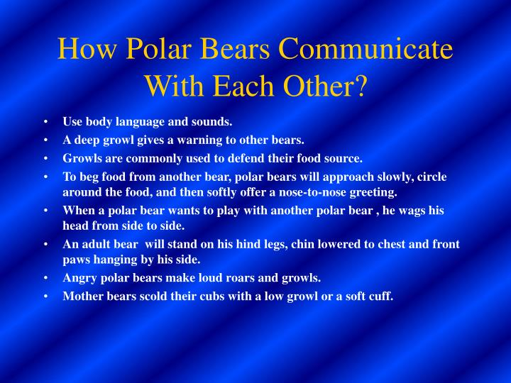 How Polar Bears Communicate With Each Other?