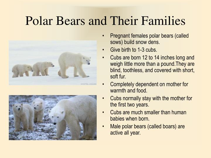 Polar Bears and Their Families
