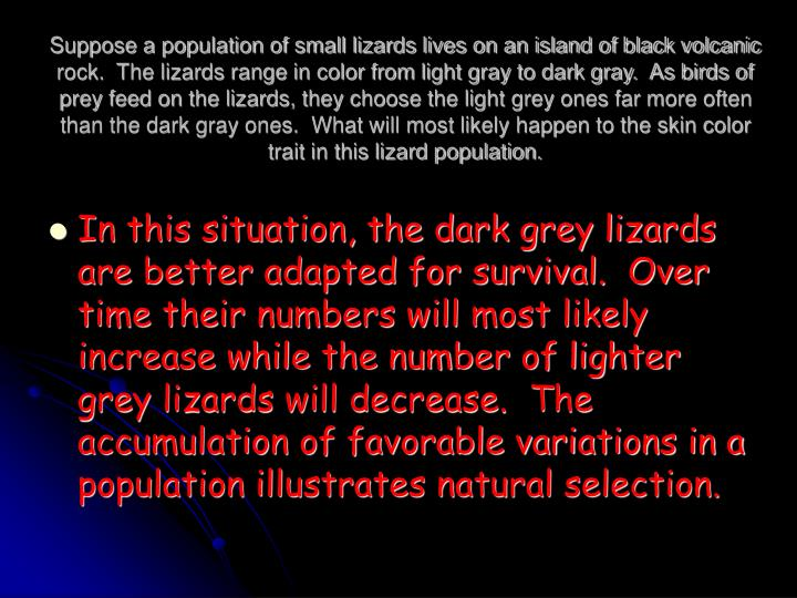 Suppose a population of small lizards lives on an island of black volcanic rock.  The lizards range in color from light gray to dark gray.  As birds of prey feed on the lizards, they choose the light grey ones far more often than the dark gray ones.  What will most likely happen to the skin color trait in this lizard population.