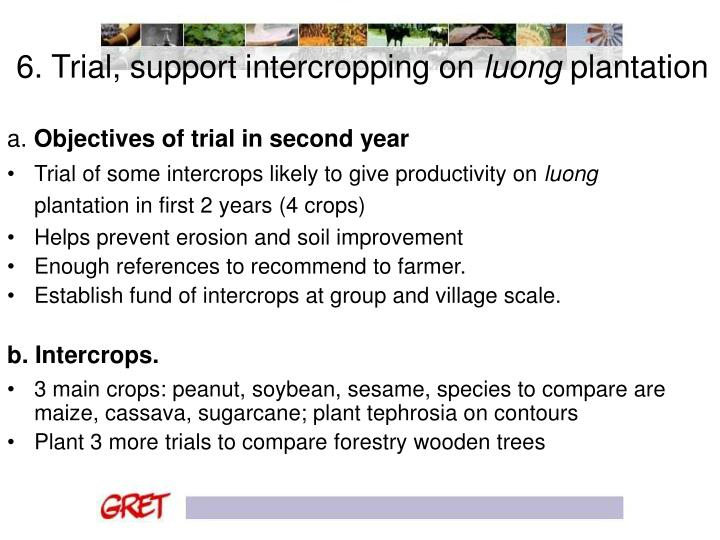 6. Trial, support intercropping on