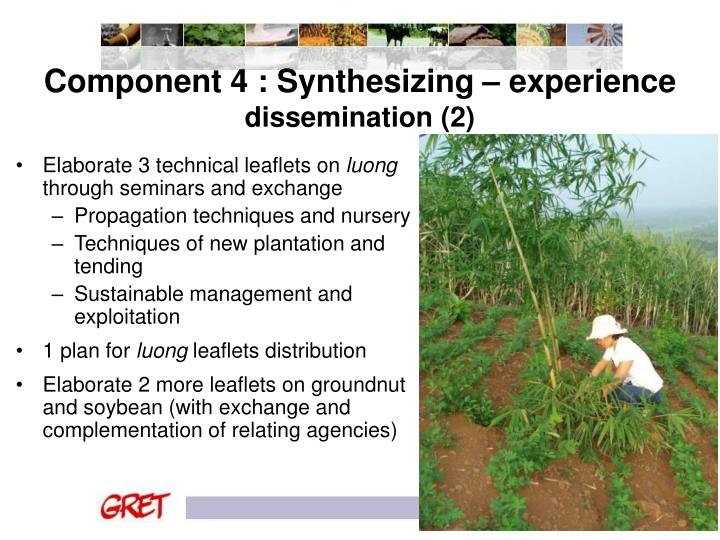 Component 4 : Synthesizing – experience