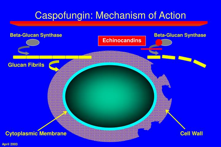 Caspofungin: Mechanism of Action