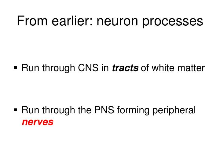 From earlier: neuron processes