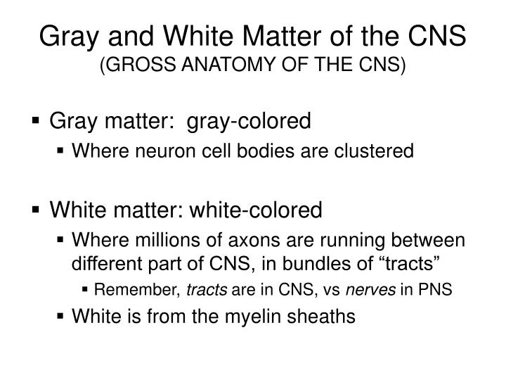 Gray and White Matter of the CNS