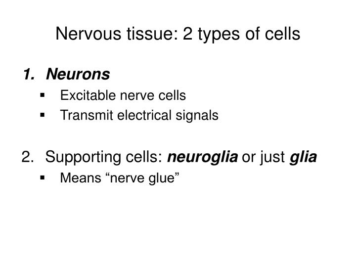 Nervous tissue: 2 types of cells