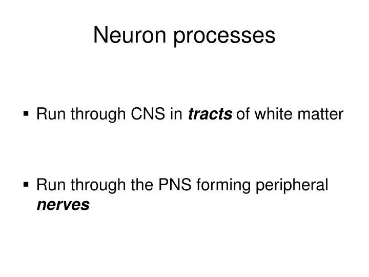 Neuron processes