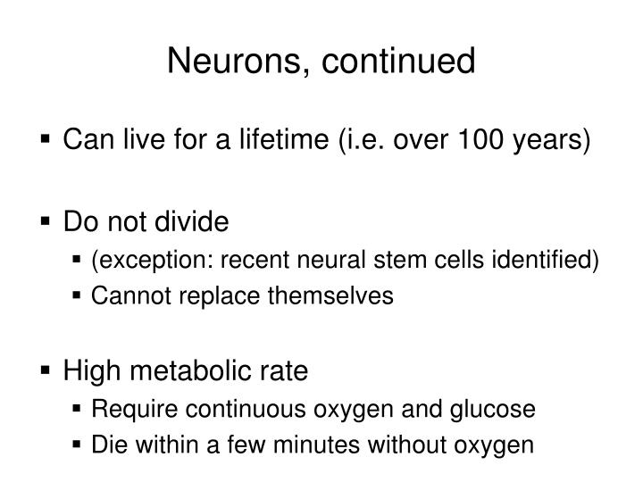 Neurons, continued