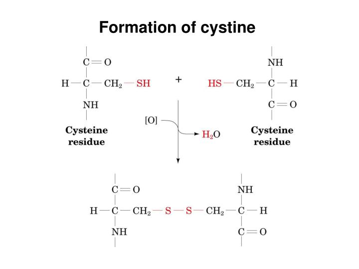 Formation of cystine