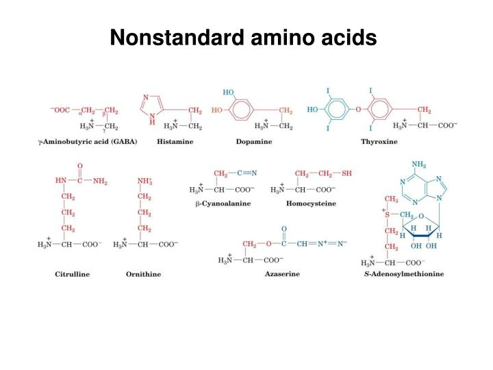 Nonstandard amino acids