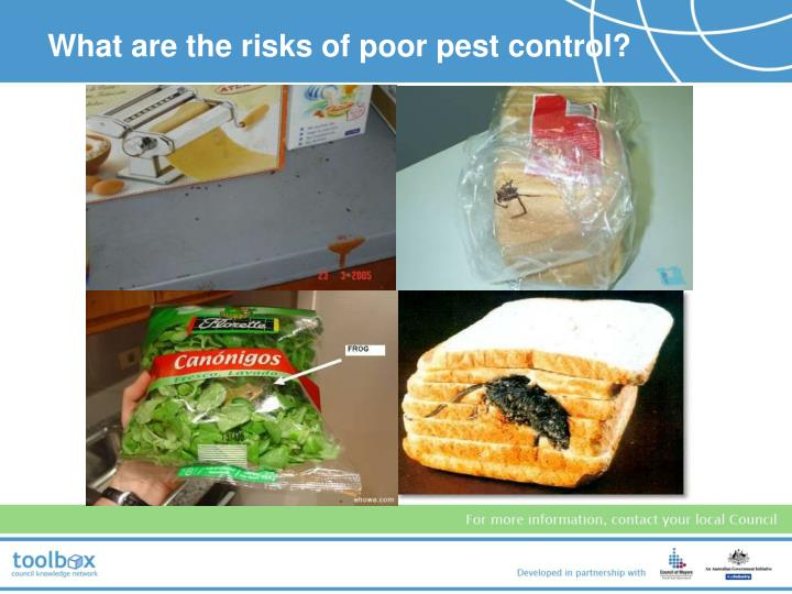 What are the risks of poor pest control?