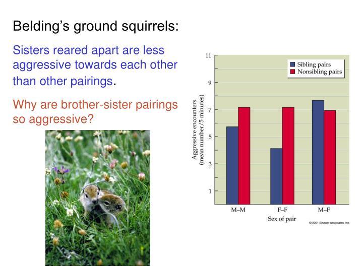 Belding's ground squirrels: