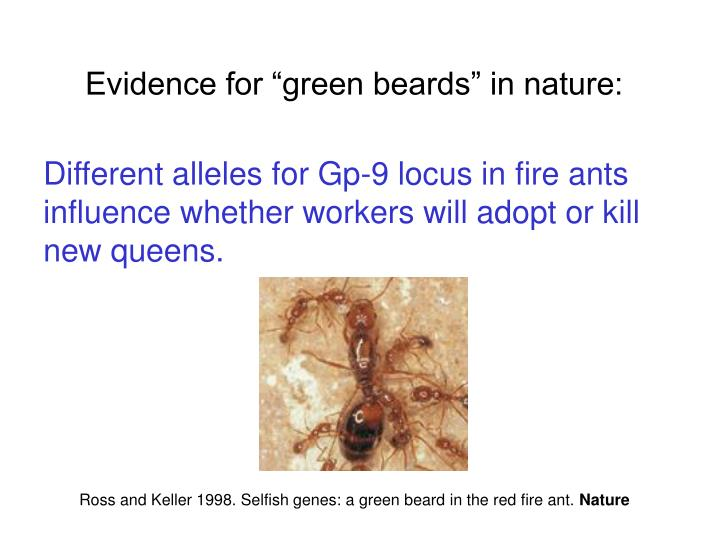 "Evidence for ""green beards"" in nature:"