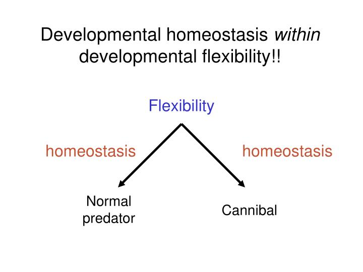 Developmental homeostasis