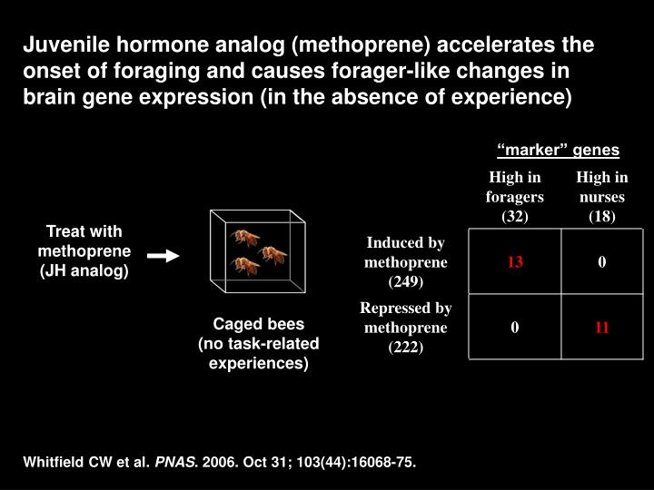 Juvenile hormone analog (methoprene) accelerates the onset of foraging and causes forager-like changes in brain gene expression (in the absence of experience)