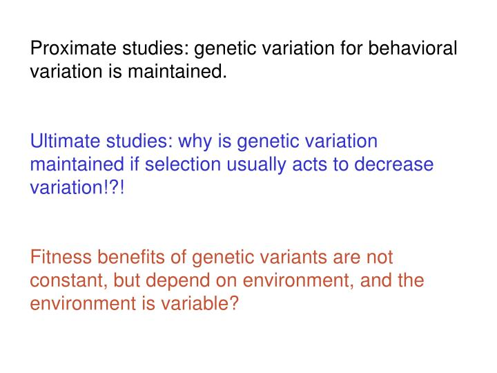 Proximate studies: genetic variation for behavioral variation is maintained.