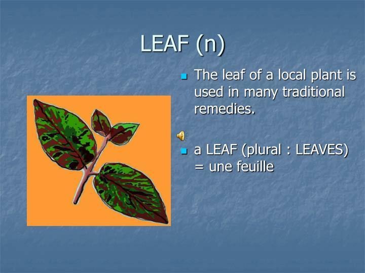 LEAF (n)