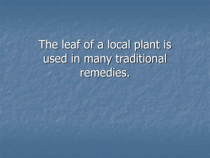 The leaf of a local plant is used in many traditional remedies.