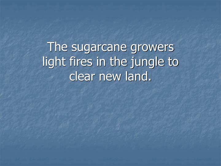The sugarcane growers light fires in the jungle to clear new land.