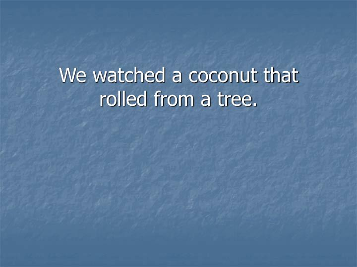 We watched a coconut that rolled from a tree.