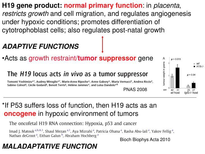 H19 gene product: