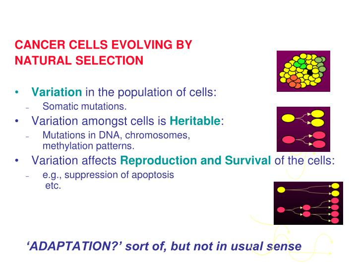 CANCER CELLS EVOLVING BY