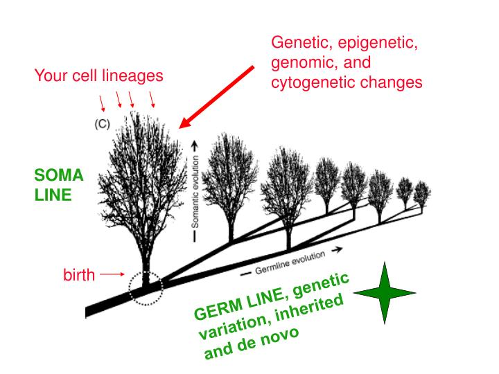 Genetic, epigenetic,
